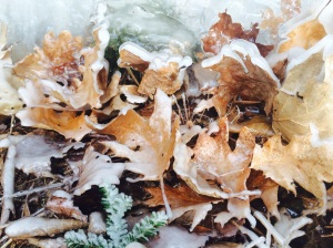 Frozen leaves in Chicago